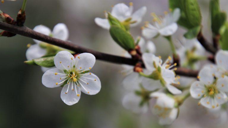 tree flowering, sprig, garden